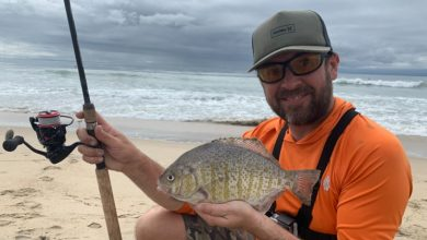 Photo of An Expert Guide to Choosing the Right Fishing Reel